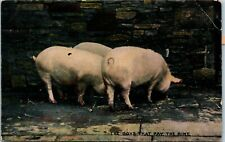 Postcard Three Pigs Eating- The Boys that Pay the Rint C.1910 K6