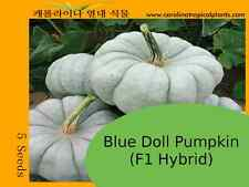 Blue Doll Pumpkin Seeds (F1) - 5 Seed Count