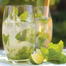 Box of 6 Empire cocktail Mojito gin tonic highball drinking glasses 510ml
