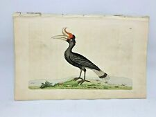 Great Hornbill - 1783 RARE SHAW & NODDER Hand Colored Copper Engraving