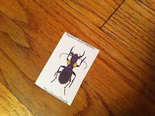 Unknown Vintage sticker decal Insect Collectible Bug Entomology Entomologist #3