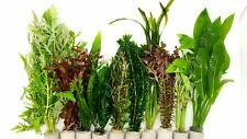 40 Aquariumpflanzen Wasserpflanzen Aquarium Bunter Mix gegen Algen in 5 Bund