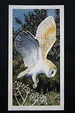 BARN OWL  HUNTING     Vintage Illustrated Card   VGC