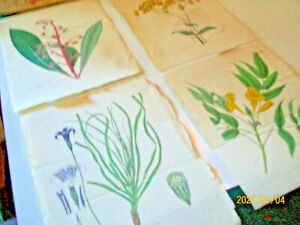 BOTANTICAL HAND COLORED ENGRAVINGS,4 ANTIQUE.dated.signed-numbered.BUY NOW!