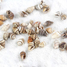 10 Pcs Conch Micro Landscape Miniature Fairy Garden ornaments Ep