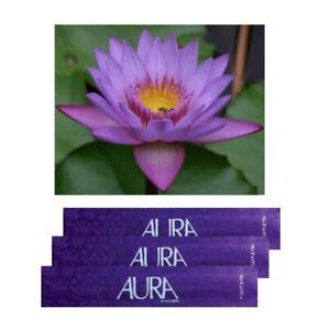 Blue Lotus Aura Incense Sticks 3 Packs ( 60 sticks )
