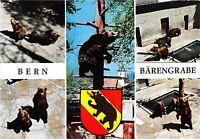 BF39414  bern switzerland   bear ours   animal animaux