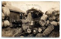 RPPC Farmer Stands on Exaggerated Ear of Corn, Giant Pumpkins & Cabbage Postcard