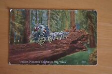 Rare Vintage Postcard FALLEN MONARCH CALIFORNIA BIG TREES 390 Horse Carriage USA