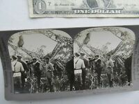 RARE Antique Stereo Photo, WRECKED, BURNED WWI ZEPPELIN w/ French Troops, Crash