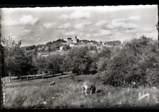 CLERMONT (60) MOUTON en PATURAGE , VILLAS & EGLISE vers 1950