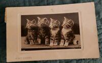 Very Small RPPC-These are Precious Kittens!- Unusual! Rare! Pets!