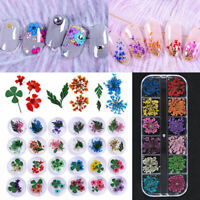 12 Color Real Dry Dried Flowers 3D Nail Art Decorations for Acrylic UV Gel DIY