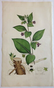 1817 hand colored print  DWALE, or DEADLY NIGHTSHADE from Flora Londinensis