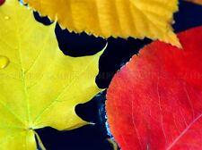 Brillante otoño otoño hojas Agua Foto impresión arte cartel Imagen bmp2350a