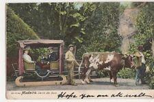 Madeira, Carro de Bois 1904 Postcard, B145
