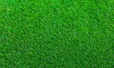 Empire Zoysia Grass Seeds/  Lawn grass 1/8 LB