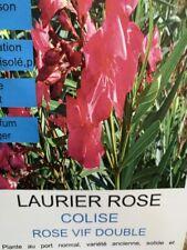 NEUE SORTE MIT ROTEN BLÜTEN Oleander Pflanze CORRIDA