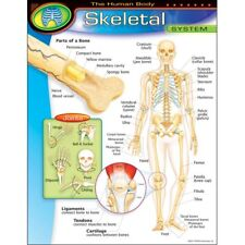 The Human Body?Skeletal System Learning Chart Trend Enterprises Inc. T-38093
