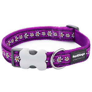 Red Dingo Dog or Puppy Collar   PURPLE Daisy Flower Design Collar   FREE P&P
