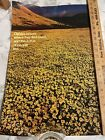 """Vintage Argus Motivational Poster; 1970's; """"Daisies Bloom Where…""""; 14 x 21"""""""