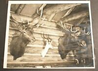 "Vintage Photograph Original Film Developed B&W 8X10"" Photo TAXIDERMY HUNTING Pic"