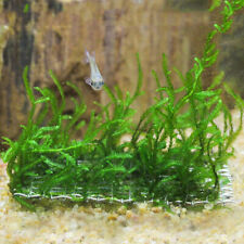 Aquarium Wire Mesh Pad Aquatic Moss Plant Water Grass Fixed Tool Fish Tank Decor