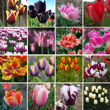 Spring Deciduous H6 (-20 to -15 °C) Plants, Seeds & Bulbs
