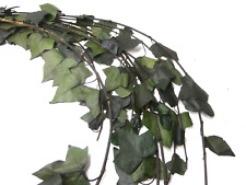 Preserved Ivy Hedera Helix Leaves Preserved leaves Green leaf, Dried flowers