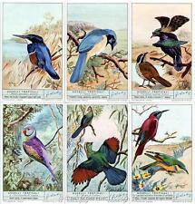 Chromo Liebig Sang. 1797 ITA Uccelli Tropicali ANNO 1963