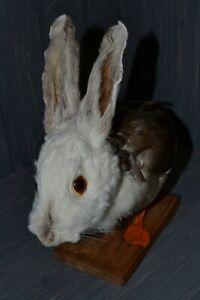 Stuffed European duck rabbit Taxidermy rabbit head/duck torso