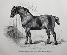 1831 ANTIQUE FARRIER HORSE PRINT ~ STALLION GAINED FIRST PRIZE NORTHAMPTON
