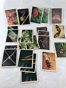 VINTAGE - 21 BACKYARD WILDLIFE CARDS - WEET-BIX - CEREAL