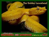 The Golden Lancehead postcard, an Endangered and Dangerous species alert