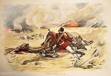 HIPPOLYTE LUCAS GRAVURE L'ANGLAIS BLESSE Paris Illustré 1885 GUERRES DROMADAIRE