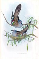 "Vintage John Gould Australian Bird Art CANVAS PRINT~ Crested Pigeon Dove 16""X12"""