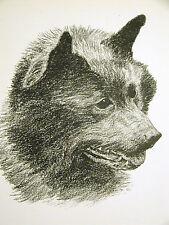 Francis Wardle 1935 Schipperke Vintage Dog Print Matted