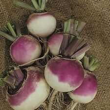 Kings Seeds - Turnip Veitchs Red Globe - 1200 Seeds