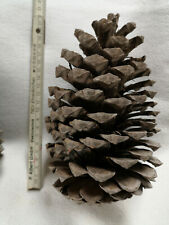 30 piñas kienäpfel kienäppel bricolaje Floristik Navidad