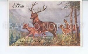 Postcard. Mailing Novelty From Girvan. Monarch of the Glen. 1964. Stag and Deer