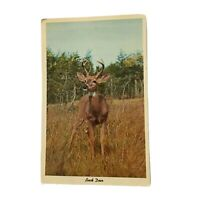 "Vintage Postcard Greetings From Petoskey Michigan ""Buck Deer"" Curteichcolor 3-D"