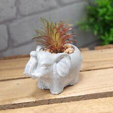 Mini Cement Effect Elephant Planter with Artificial Succulent Plant