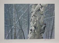 Robert BATEMAN Hairy Woodpecker LTD art print Birch Tree Forest MINT in folder