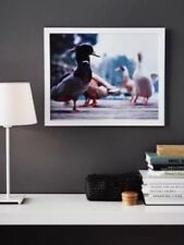IKEA Limited Edition WHITE 40cm x 50cm ~ A2 Picture Frame Photo Frame BRAND NEW