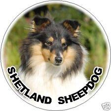 2 Shetland Sheepdog / Sheltie Car Stickers By Starprint - Auto combined postage