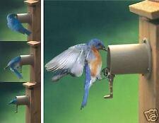 2 Pack Audubon Bird Guardian Screw on Bird House Protector Predator Guard Se997