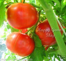 Rojo tomate-Jardinero Pride 60 Semillas Bio-Eco Orgánico Certificado vegetales