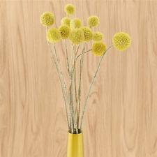 10Pcs Natural Dried Flower Single Yellow Balls Wedding Party Home Decor Gifts