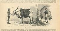 ANTIQUE WHITE BULL STEER COW WATER JUGS CARRIER SHEPHERD BOY CHILD OLD ART PRINT