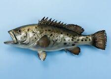 "Taxidermy  Grouper 29"" Fish Mount - Wall mount Decor -Fish Replica"